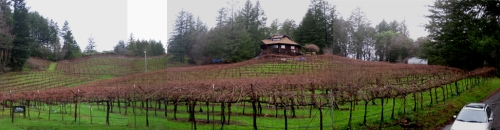 Guilliams Vineyards -Artisanal Winemaking in the US of A