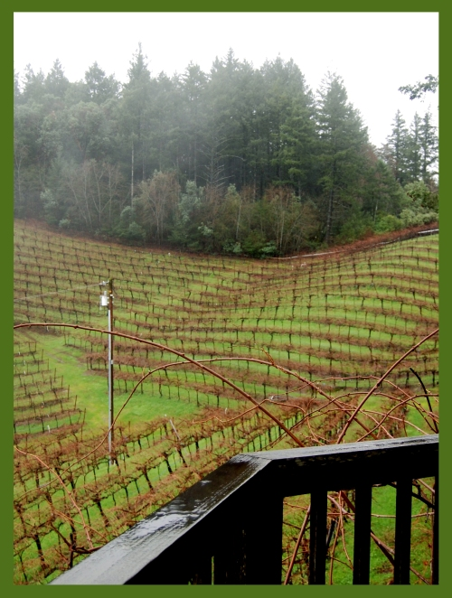 A view of the vineyards from the Guilliams house and winery