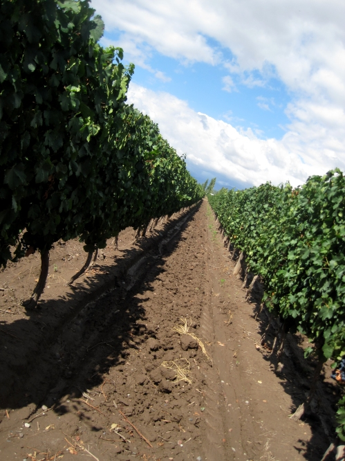 The Pizzella family vineyards in Mendoza's Uco Valley