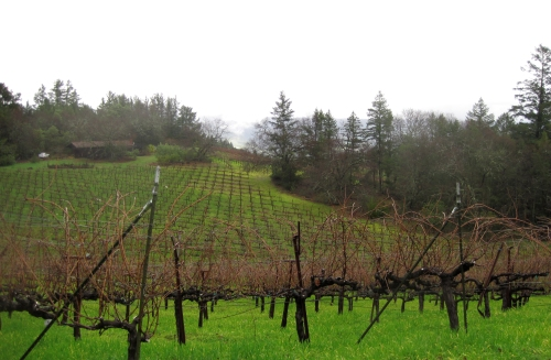 A view of the vineyards at Philip Togni